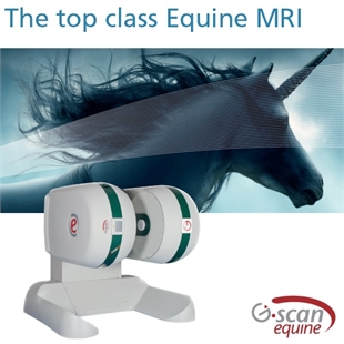 G scan equine